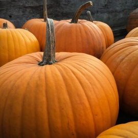 Fall Festivals & Pumpkin Patches
