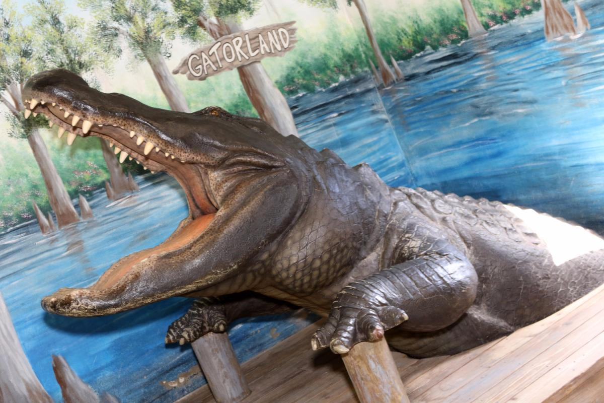 It's Time You Revisited Gatorland In Orlando