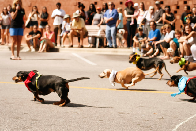 The 9th Annual Dogtoberfest Takes Over The Domain