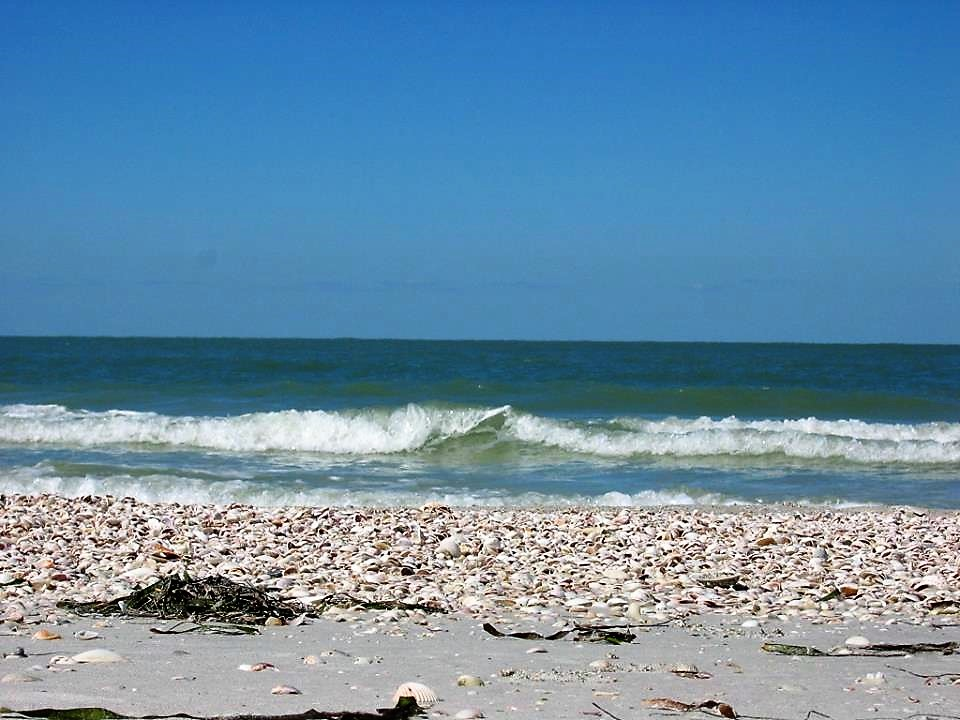 Things to Do in St. Pete Clearwater | Visit Shell Key