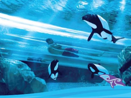 SeaWorld Aquatica Water Park Orlando Florida