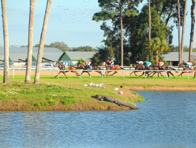 Tampa Bay Downs Opening Day November 25 Will  Feature Thrilling Races & Huge Pool Prizes