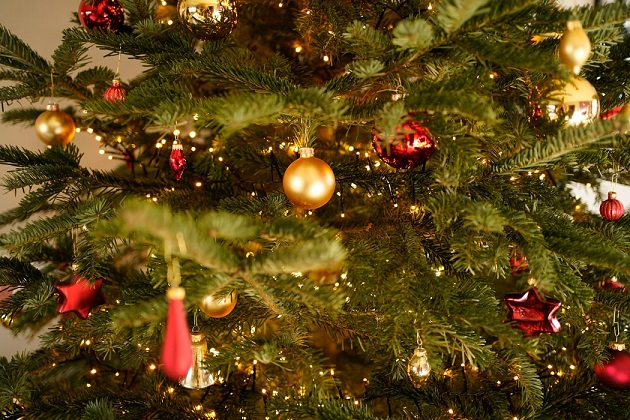 Where To Buy Christmas Trees In Orlando