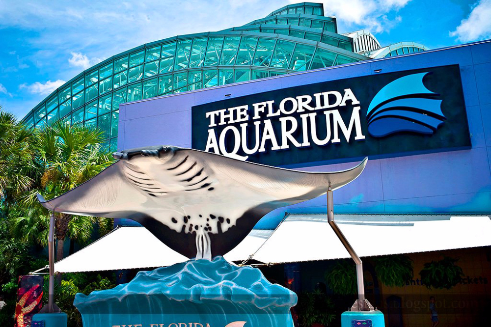 Top Zoos & Aquariums in Florida: See reviews and photos of zoos & aquariums in Florida on TripAdvisor.