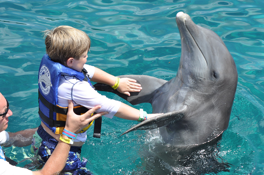 Make a Splash and Swim With Dolphins in Miami
