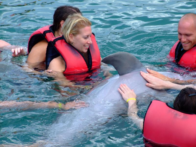 Swim With Dolphins in Miami
