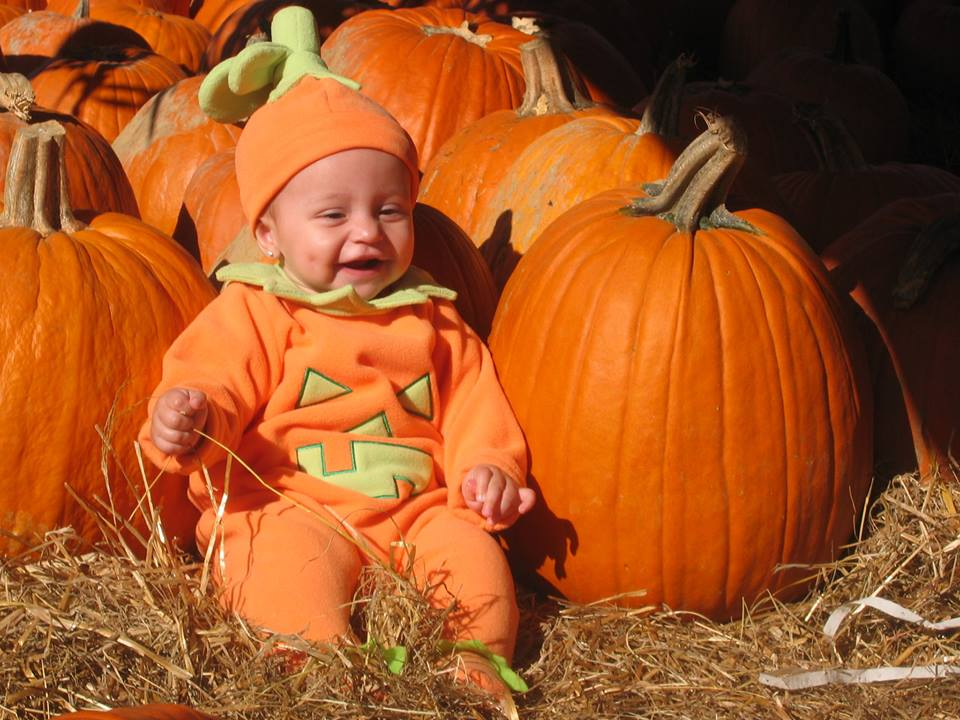Fall Events In Sarasota | Pumpkin Patches & Fall Festivals