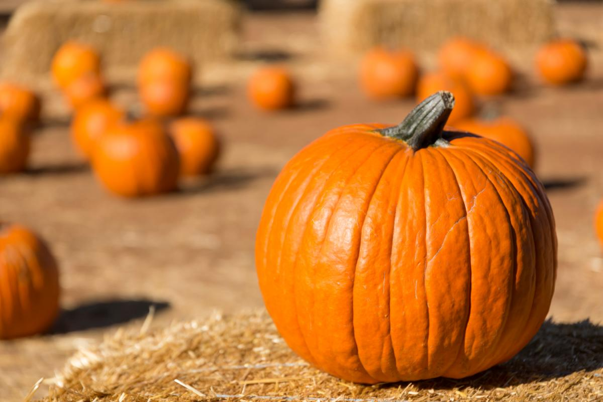 Fall Festivals and Pumpkin Patches in Daytona