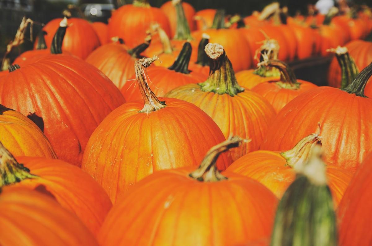 Fall Festivals in New York City