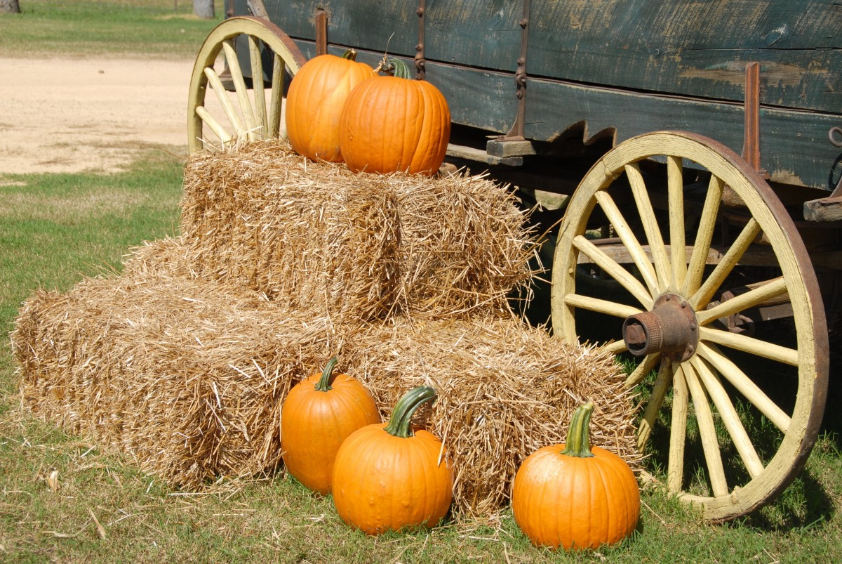 Fall Festivals in Tallahassee
