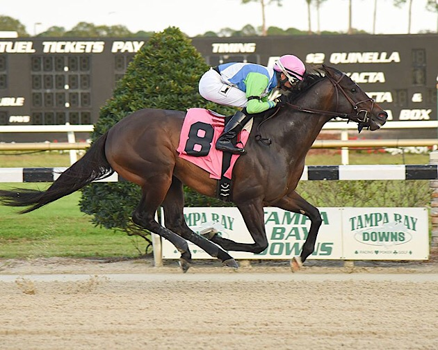 Tampa Bay Downs 2018 Cotillion Festival Day Delivers A Full Day Of Racing Fun Saturday, December 15