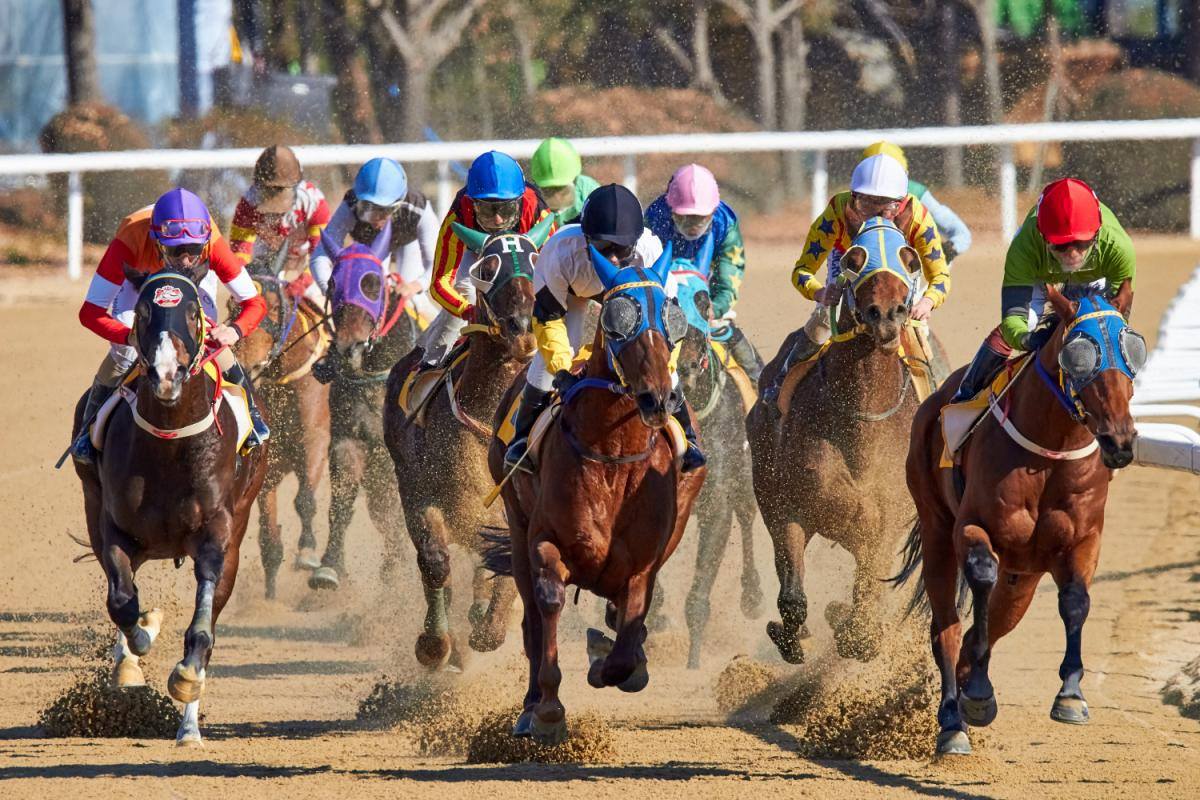 The Lambholm South Tampa Bay Derby and Other High Stakes Races Pack Guaranteed Excitement (And Money)