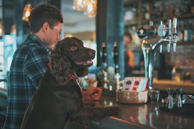 Dog-Friendly Bars in St. Petersburg and Clearwater