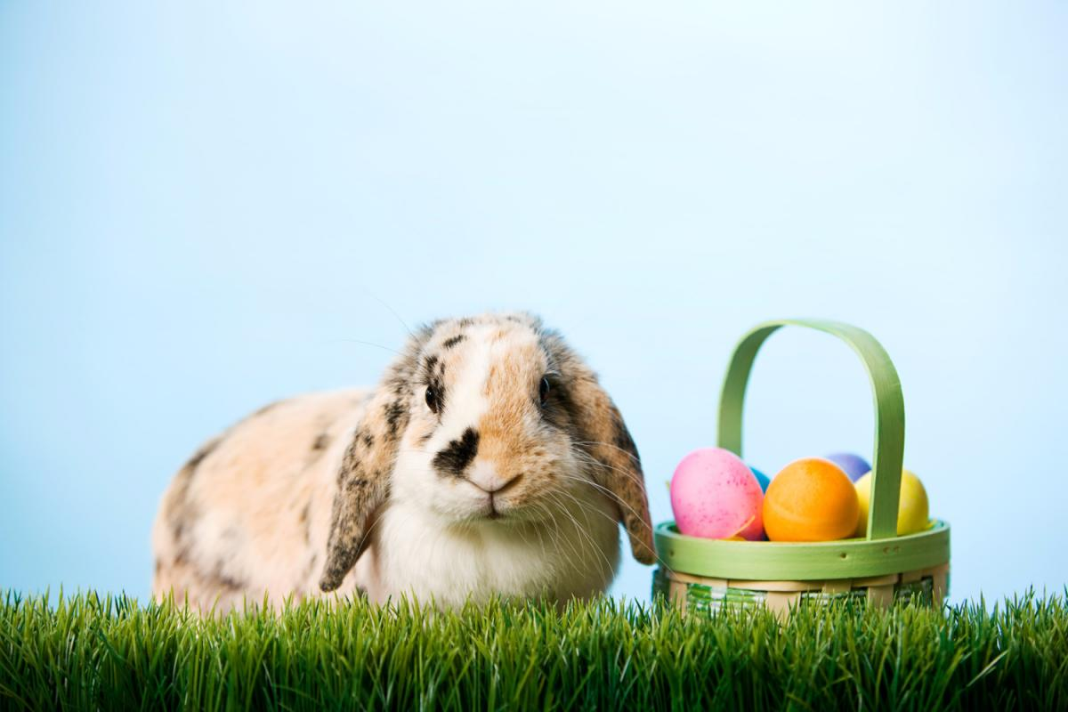 Where to Get Pictures with the Easter Bunny in St. Petersburg and Clearwater | Easter Egg Hunts and More