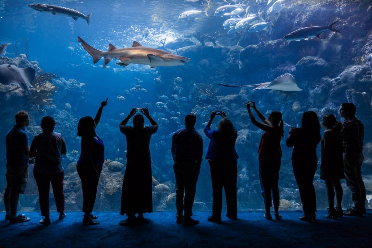 SeaGrapes; A Night of Food, Wine, Research and Conservation at The Florida Aquarium
