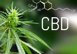 What is CBD from the Cannabis Plant?