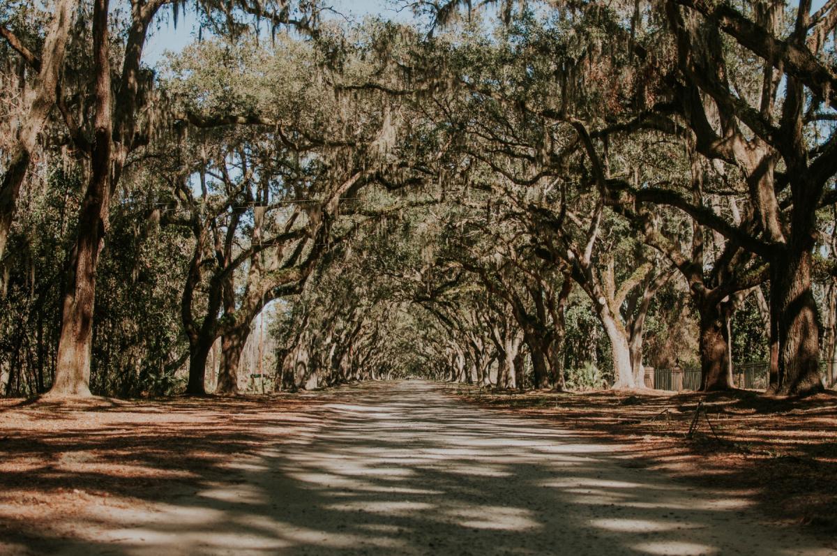 Tours in Savannah | Take a Tour of Beautiful Savannah