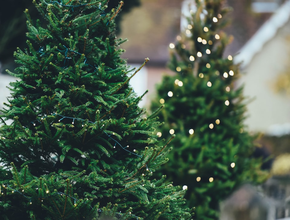 Where to Buy Christmas Trees in Dallas