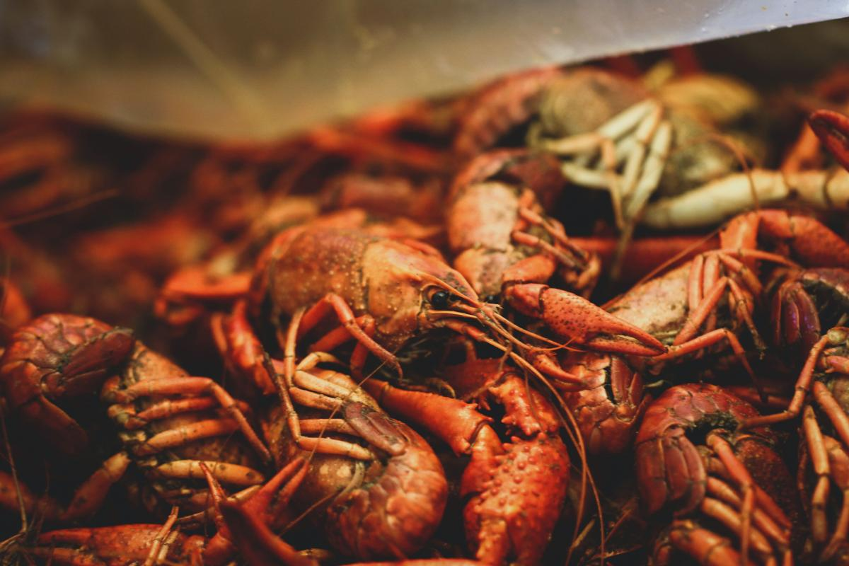 Crabs and Crawfish in St. Pete, Clearwater, and Palm Harbor | Shellfish, Lobsters, and More