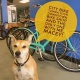 813 Spotlight | City Bike Tampa Your Downtown Bike Shop