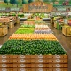 Tampa Bay Residents Will Soon Have More Grocery Options