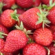 Get Your Fill of Strawberries, Music, and More at the Florida Strawberry Festival in Plant City