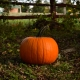 Pumpkin Patches in St. Pete and Clearwater