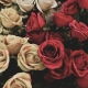 Valentine's Day Florists in Tampa | Fast Delivery, Roses