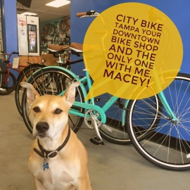 813 Spotlight | City Bike Tampa Your Downtown Bike Shop