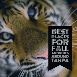 Outdoor Fun in Tampa Bay | Best Places for Fall Activities