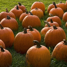 Where To Find The Best Pumpkin Patches In Orlando