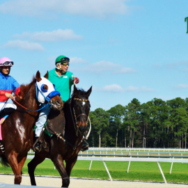 Tapwrit Wins Race at Tampa Bay Downs: Kentucky Derby Next?