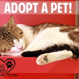 Adopt a Pet, Rescue Animals of the Month
