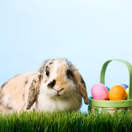 Easter Egg Hunts, Bunny Photos and Easter Fun in Tampa Bay