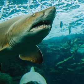 The Florida Aquarium Presents Tampa Bay's SharkCon 2017