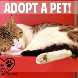 Adopt a Pet, Rescue Animals of July