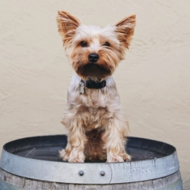 Dog-Friendly Orlando Bars and Restaurants