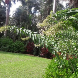 Family Fun Things To Do in St. Pete