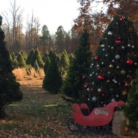 Where to Buy A Christmas Tree in Pinellas County