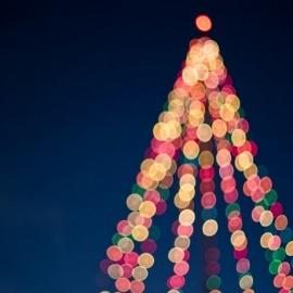 Where To See Christmas Lights In Sarasota