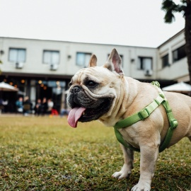 Where to Take Your Pup to Play in Tampa!