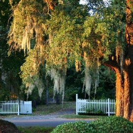 Spend a Day Filled With Fun and History in the Tiny Town of Micanopy, FL