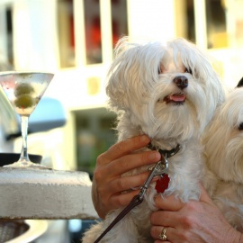 Dog-Friendly Restaurants in Miami