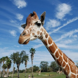 Busch Gardens Preschool Card Offers Free Admission for Kids Up To Five Years Old!