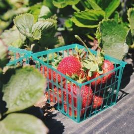 Floral City Strawberry Festival