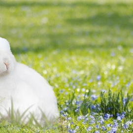 Where to See the Easter Bunny In Fort Lauderdale