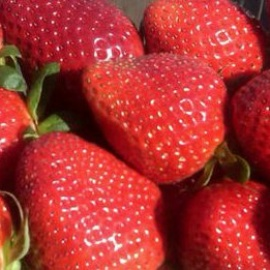 Local U-Pick Farms Give You Farm-to-Home Produce Like Strawberries, Blueberries, Onions, and More