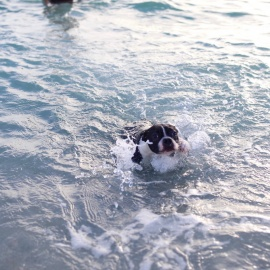 Dog-Friendly Beaches in Miami