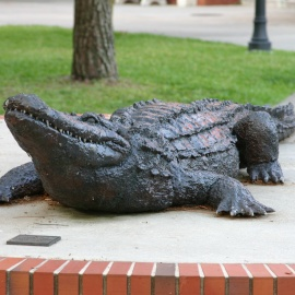 Top Things to Do in Gainesville