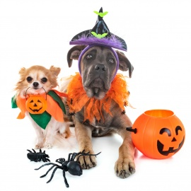 Pups on the Patio: Halloween Edition at the Aloft Hotel Orlando